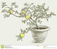 lemon tree x: download lemon tree vector drawing flowerpot