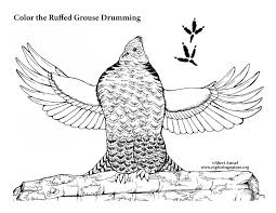 Small Picture Ruffed Grouse Drumming Coloring Page