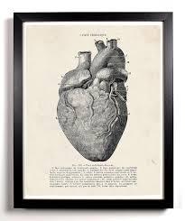 human heart anatomy home kitchen nursery bath dorm office decor anatomy home office
