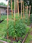 Шпалера для помидоров фото