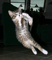 <b>Cat play</b> and <b>toys</b> - Wikipedia