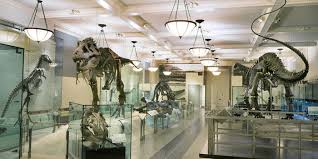 Image result for museum of natural history images