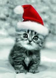 """Résultat de recherche d'images pour """"un chaton trop mimi"""""""