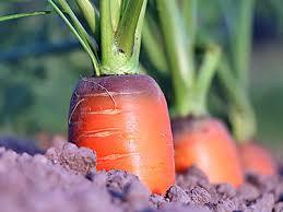 Какие <b>удобрения</b> нужны для различных <b>овощных культур</b> ...