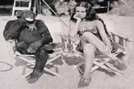 Image result for monkey see monkey do pictures