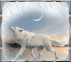 """Résultat de recherche d'images pour """"gifs des animaux sous la pluie"""""""
