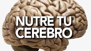 Image result for imagenes gratis de cerebro