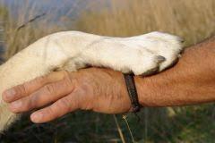 """Résultat de recherche d'images pour """"pattes de chiens"""""""