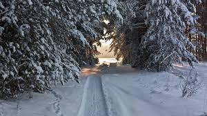 """Résultat de recherche d'images pour """"photo foret hiver"""""""