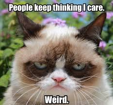 grumy cat on Pinterest | Grumpy Cat, Grumpy Cat Meme and Funny ... via Relatably.com