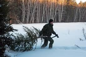 Глава Рослесхоза рассказал о ценах на новогодние <b>елки</b> ...