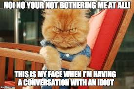 mad cat Meme Generator - Imgflip via Relatably.com