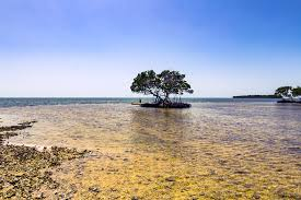 Ten Thousand Islands