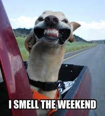 I smell the weekend | Funny Dirty Adult Jokes, Memes & Pictures via Relatably.com