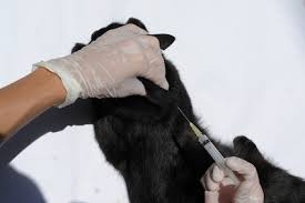 Veterinary Colleges in Arizona | Synonym