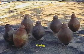 Image result for gangsing