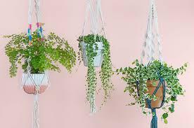 How to Make A Macramé Plant <b>Hanger</b> - FTD.com