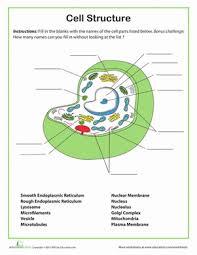High school biology homework help FPDF