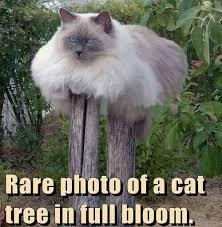 Animal Memes - Rare cat tree - Funny Memes via Relatably.com