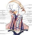 jugular