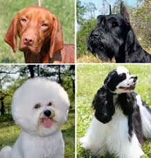 <b>Dog coat</b> - Wikipedia