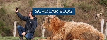 Animals that <b>stole my heart</b>: the Highlands cow edition | Chevening