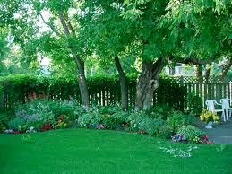 Small Picture Spring Hill Nursery Flowering Plants Shrubs Shade Plants