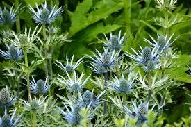 Image result for Scottish Gardens