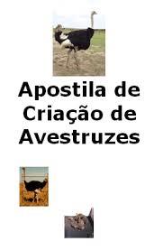 Resultado de imagem para FOTOS DE RECEITA DE   AVESTRUZ