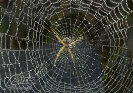 Resultado de imagem para foto de teia de aranha