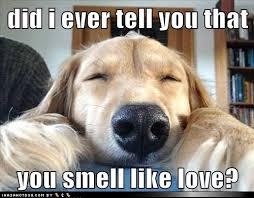 7 Memes to Help You Celebrate National Pet Day via Relatably.com