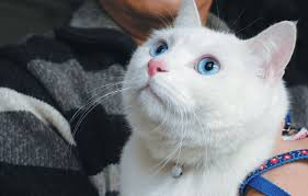 China's <b>love</b> for <b>cats</b> purring along nicely - Asia Times
