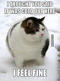 funny-cat-in-snow-meme – Bajiroo.com via Relatably.com