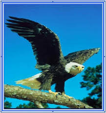 Image result for Ezekiel 17: 3 The eagle and the Vine