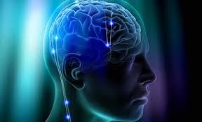 Imagini pentru creier uman
