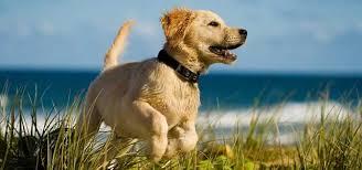 Bildergebnis für urlaub mit hund