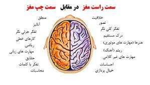 Image result for مغز