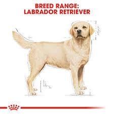 <b>Royal Canin Labrador Retriever</b> Food | Pets At Home