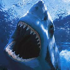Картинки по запросу акула