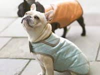 <b>dog</b> clothes: лучшие изображения (21) | Pet clothes, <b>Dog</b> clothing и ...