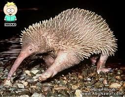 صور حيوانات غريبة images?q=tbn:ANd9GcR