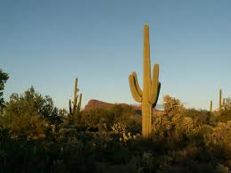 confidentiality non compete agreements held unenforceable against confidentiality non compete agreements held unenforceable against former employee arizona court holds
