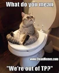 Funny Memes Clean Cats (5) - HD 3D Unique Wallpapers via Relatably.com