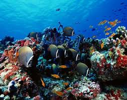 The beautiful Coral Reefs in Mal…