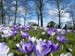 Znalezione obrazy dla zapytania Kwiaty w marcu