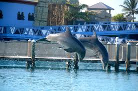 dolphin essay conclusion ocean world to go or not to go turf to surf turf to surf dolphins jumping ocean world