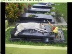 Dog Sleeps On Grave Of Owner | WeKnowMemes via Relatably.com
