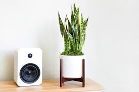 Léon & George – Premium Online <b>Plant</b> Shop – Potted <b>Plants</b> ...