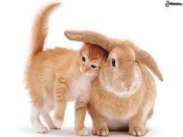 Résultat de recherche d'images pour 'lapin'