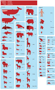 best images about zoology career options zoology mammals organizing language materials